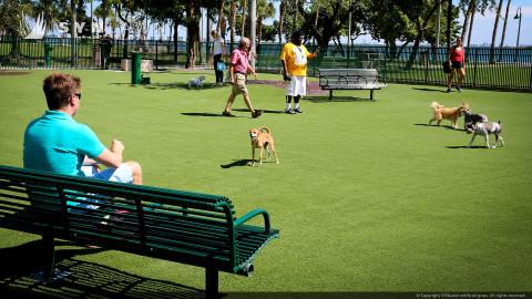 community dog park built with artificial grass